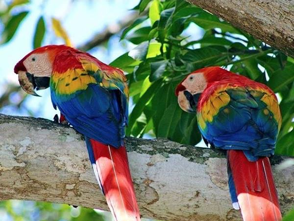 Homes in Costa Rica To Buy