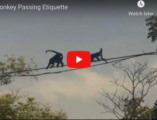 Monkey Passing Etiquette